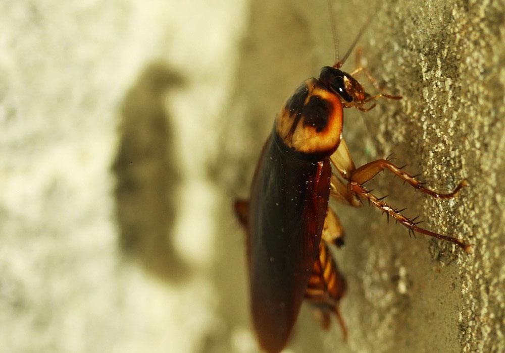 pest control Abu Dhabi